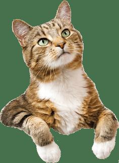 cat-cutout