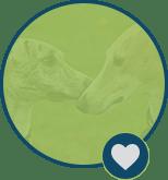 greyhoundgreen