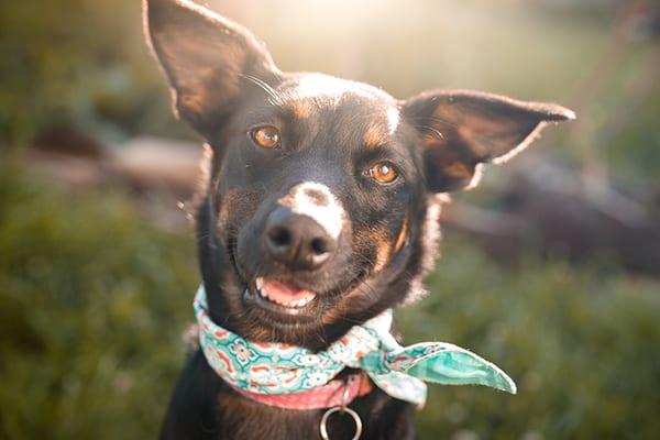Cute black mutt dog outdoor portrait
